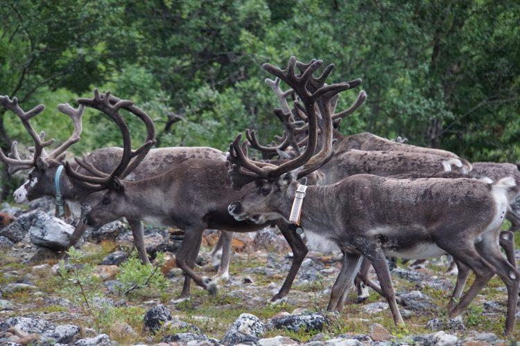 #33 Sekkemo – Langfjordbotn